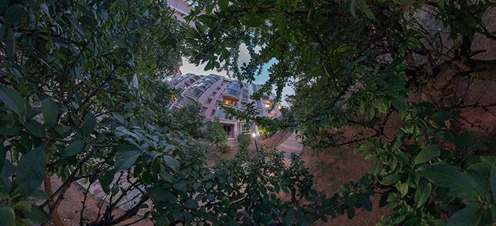 小鸟的视角-树丛中