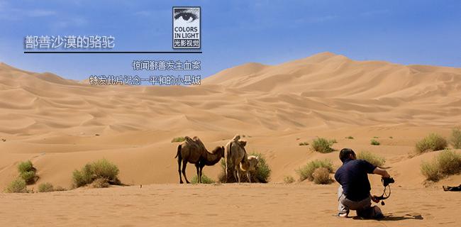 鄯善的骆驼