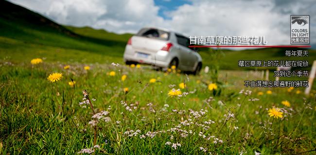 甘南草原的那些花儿