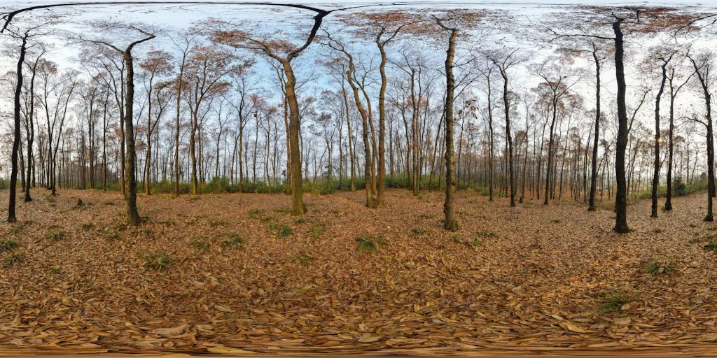 平天湖小树林