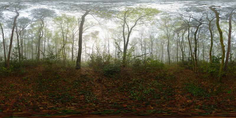 平天湖迷雾森林